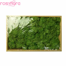 Preserved green moss for design and residence floral arrangements