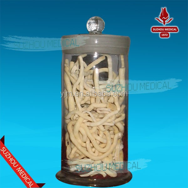 Chinese herbal crude drugs