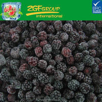 hot selling frozen blackberry top quality market price