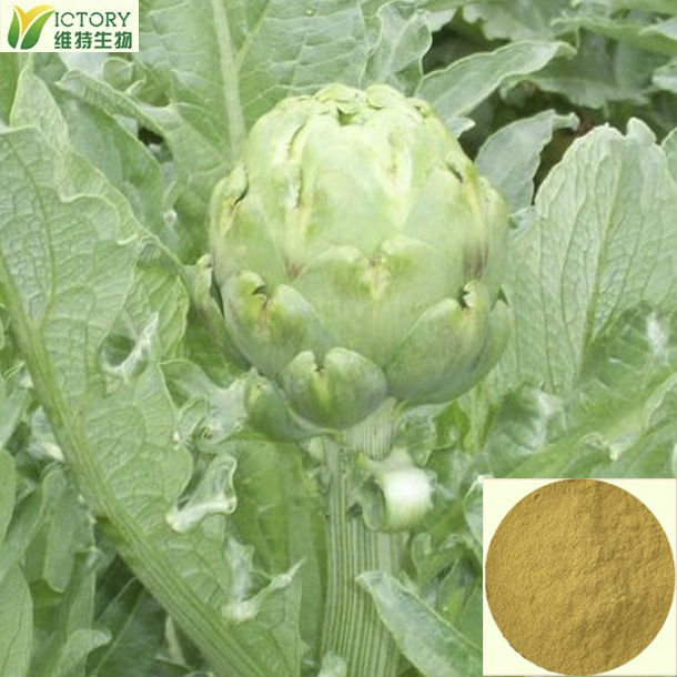 Factory Supply cardoon extract 5% Anti-oxidation
