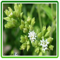 plant extract reb a stevia extract