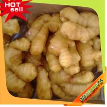 Cheap Prices Professional Manufacturer ginger for export to uk latest wholesale