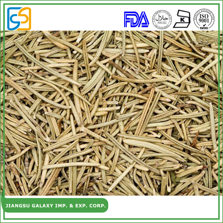 OEM service powder dried rosemary extract