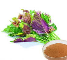 Best quality best sell dried perilla leaf extract