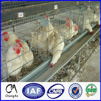 Poultry Farm Equipment Battery Chicken Cage, Layer Egg Chicken Cage for Sale in Ghana