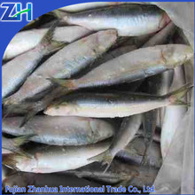 Frozen sardines china