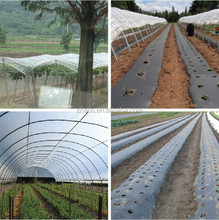 made in china transparent film greenhouse plastic roll whole sale price