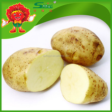 China Wholesale Potato with High Quality