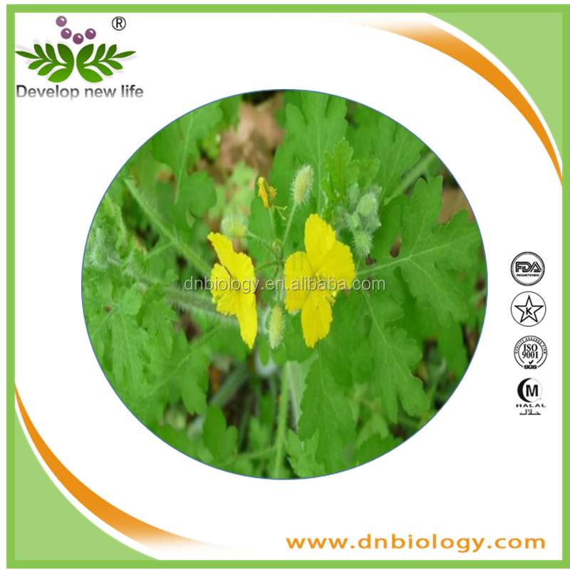 Cordata extract plant extract chelerythrine 50% alkali content manufacturers Spot