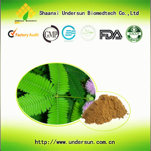 Wholesale 100% pure natural organic Mimosa extract