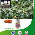 100% Natural & pure bulk anise oil, star anise oil, Chinese star anise oil