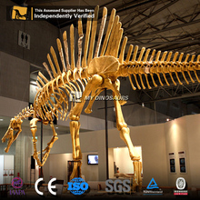 MY Dino SF-09 Dinosaur Exhibition Spinosaurus Skeletons For Sale