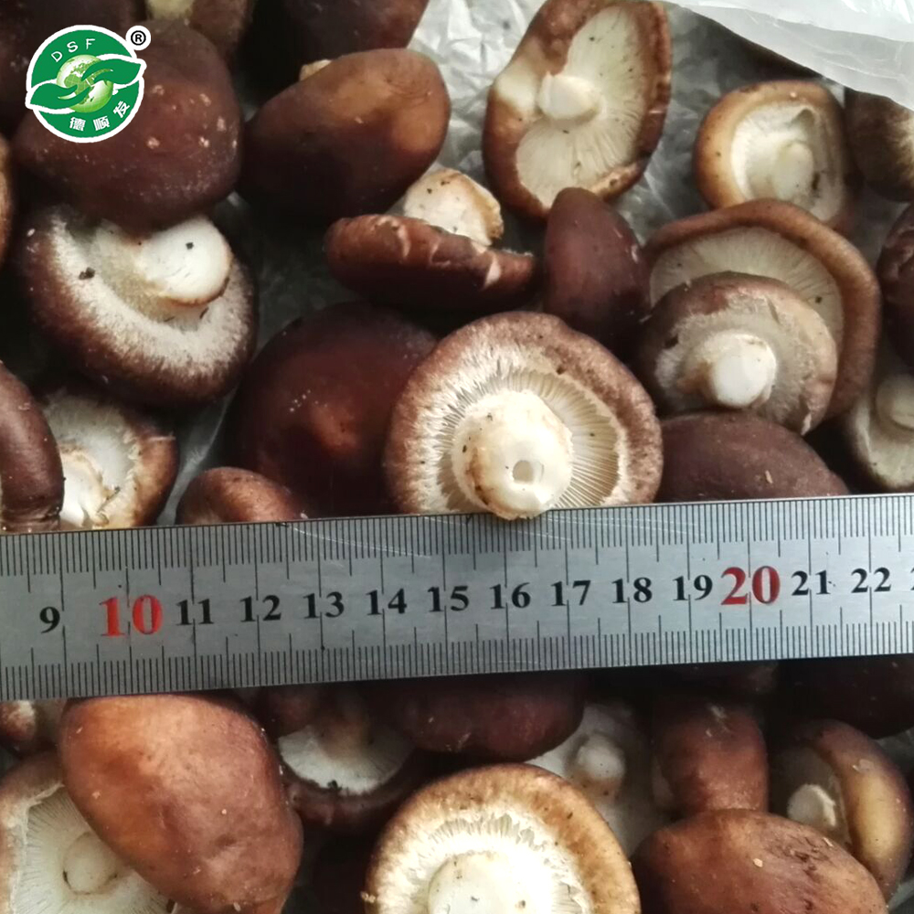 Long-term delicious frozen vegetable fresh shiitake mushrooms