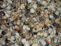 sea shell beads for art and crafts, kids crafts, scrapbooking, jewelry designer