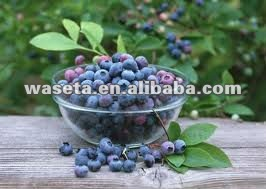 Natural Bilberry Extract for Anti-oxidaniton 8