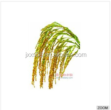 Pure rice bran oil manufacturer in hot sale in China
