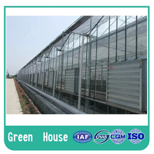 Economical PC Sheet Greenhouse for Agricultural Cultivation