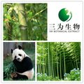 Traditional Green Plant Extract Bamboo Extract from 3W Manufacturer