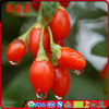 Low suger goji berry hot selling dried goji berry siyah goji berry with low price