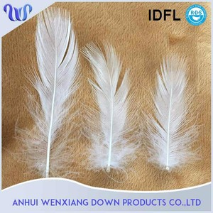2-4cm Nature Sticky Washed White Duck Feather Price