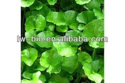 Gotu Kola Extract,also called Herba Centellae extract, anti-aging natural herb