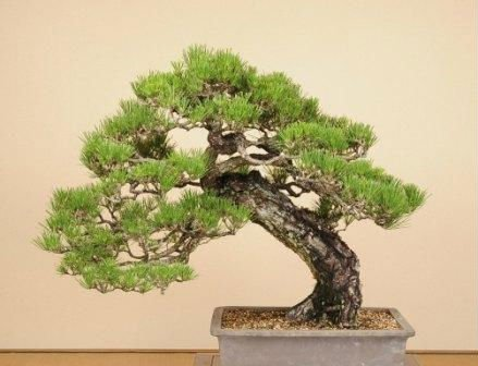 Large Outdoor Bonsai Trees Made in Japan