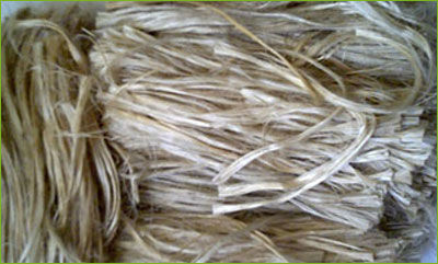 The Raw Jute in Bales * jute goods exporter