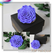 Indian Wedding Gifts for Guest Wholesale House Plants Preserved Roses