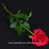 Wholesale Price Flower Rose Pink Decor