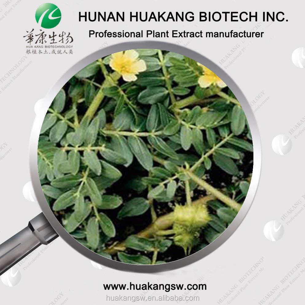High quality Fructus Tribulus Terrestris Extract Powder/tribulus terrestris capsules/ health care product