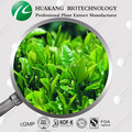 ISO Natural Healthy Supplement EGCG 98% tea Polyphenols Green Tea Extract