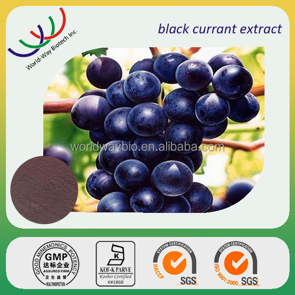 Anthocyanidin free sample HACCP KOSHER FDA manufacturer 10% anthocyanidin black currant seed extract