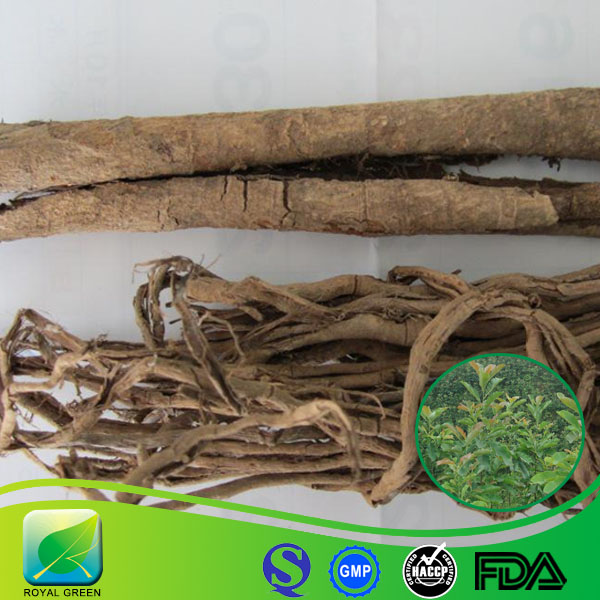 Traditional Chinese medicinal Magnolia Officinalis Bark