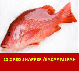 Red Snapper & Kakap merah
