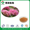 High Quality Natural Rhodiola Rosea Extract Salidroside in Cosmetic Grade for Skin Whitening