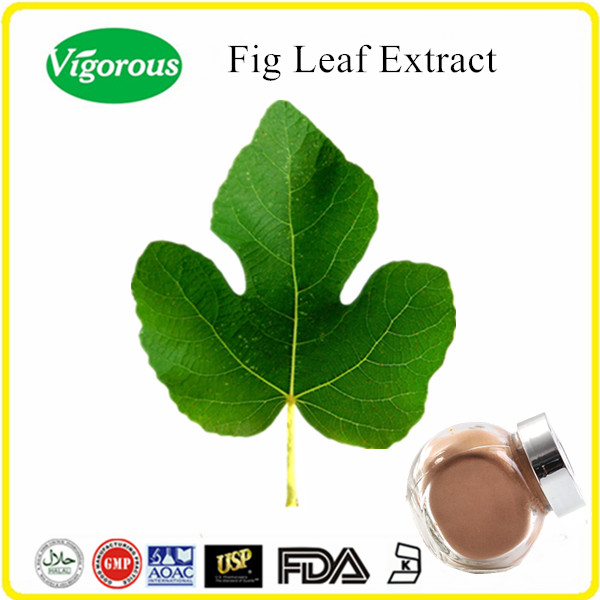 Free sample Organic fig leaf extract/fig leaf extract powder/fig leaf powder extract