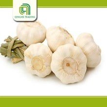 Hot selling garlic seller 5.5cm fresh garlic natural white garlic for wholesales
