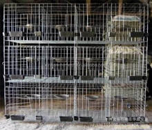 High Quality racing pigeon breeding cage for Bahrain