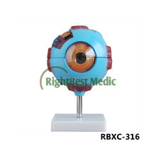 Giant Eye Model Human Medical Anatomy Eye Model,plasic eyeball model