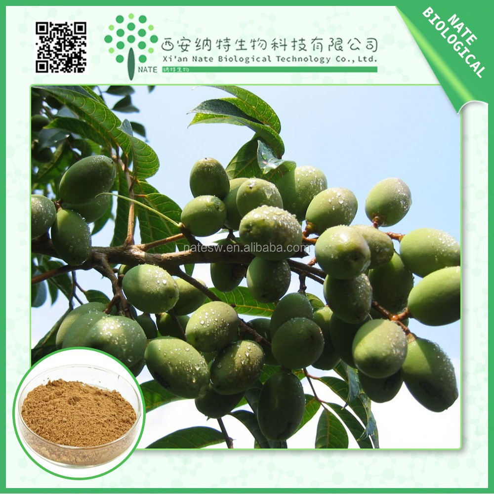 High quality oleuropein olive leaf extract olive extract 10:1