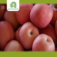 china fresh fuji apples sweet apples organic apples wholesale importer with great price