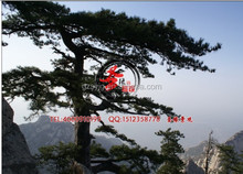 factory price artificial pinetree / fake pine tree for fake mountain decoration
