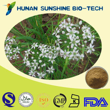 Hot sale Tub Onion Seed Extract Semen Allii Tuberosi Extract Cure Knee pain plant extract