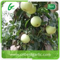 fresh golden delicious apple wholesale turkey