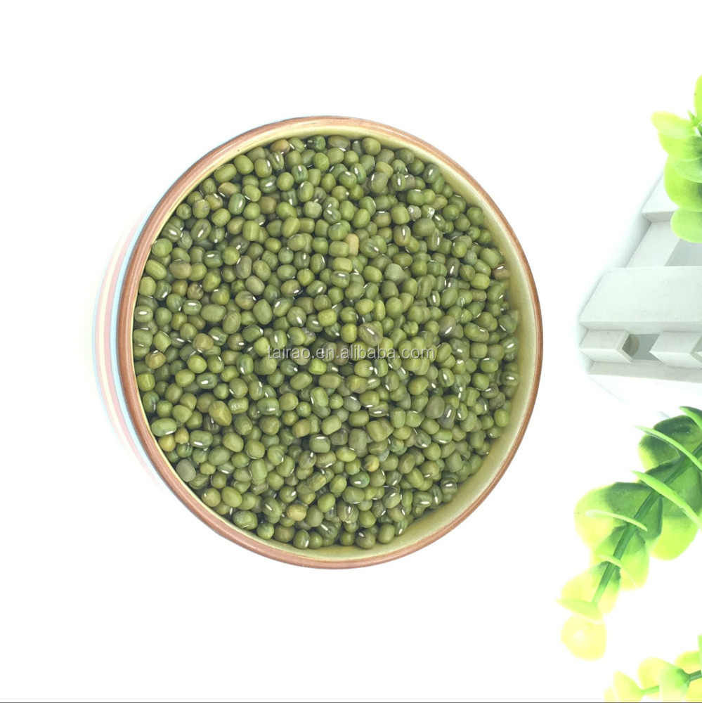 Nutrients cylindrical green mung beans buyers with competitive price