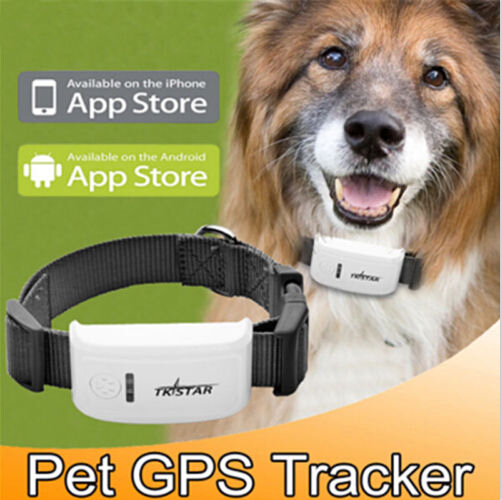 2015 best buy gps tracker cat tracker tk909 tristar gps tracker system for dogs ,personal ,kids ,free shipping ,no bo