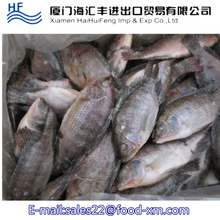 New Live Tilapia Fish Whole Round Farm Feed Tilapia For sale