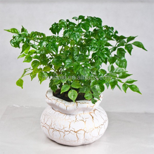 wholesal plant bonsai volcanic clay soil