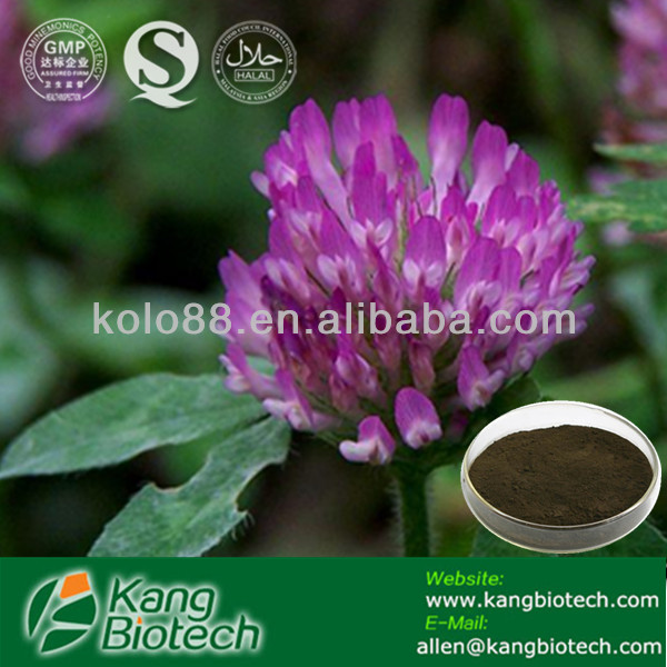 red clover extract powder low price red clover extract for antibiotic
