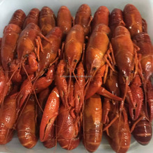 Frozen whole round crayfish / crawfish